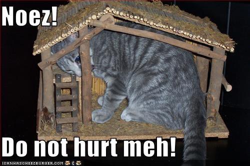 Cheezburger Image 2966287616