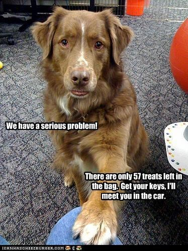 border collie,cars,problem,serious,treat