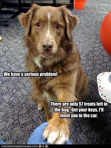 border collie cars problem serious treat - 2966428416