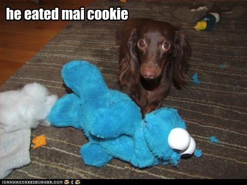cookies,dachshund,destruction,eat,mine,revenge,stuffed animal