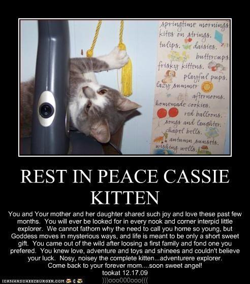 REST IN PEACE CASSIE KITTEN