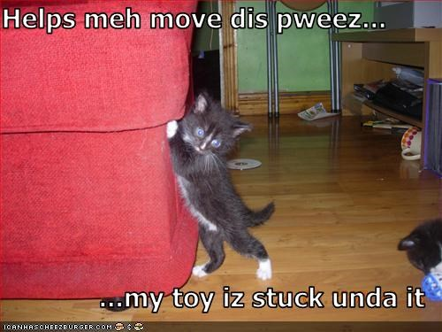 couch,cute,halp,kitten,toy