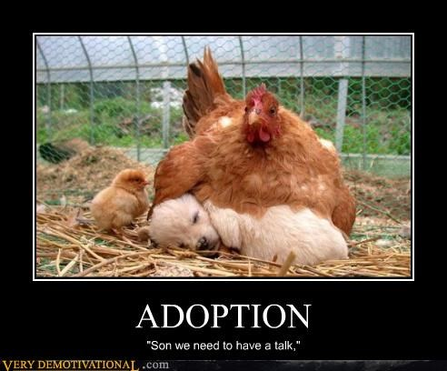 Sad,adoption,chicken,puppy