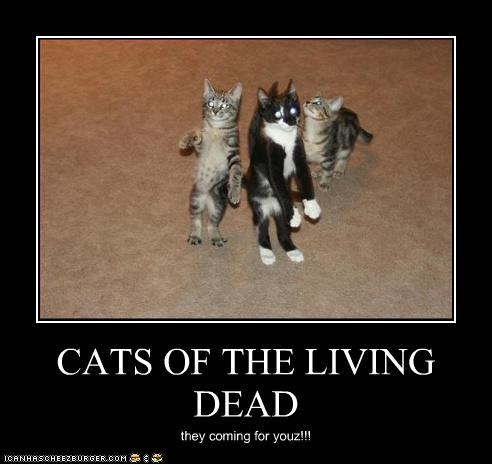 CATS OF THE LIVING DEAD they coming for youz!!!