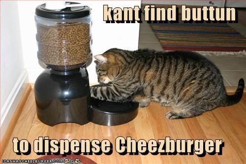 Cheezburger Image 2969744128
