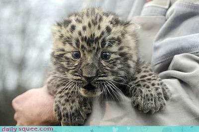 baby cat cheetah - 2970000128