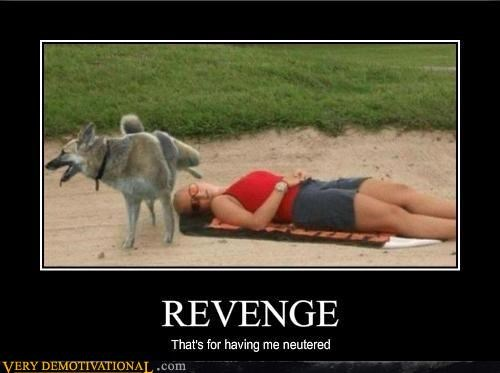 dogs hilarious pee revenge sleeping lady - 2970727680