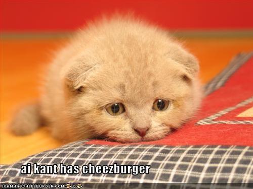 Cheezburger Image 2971115520