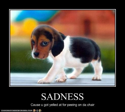 SADNESS Cause u got yelled at for peeing on da chair