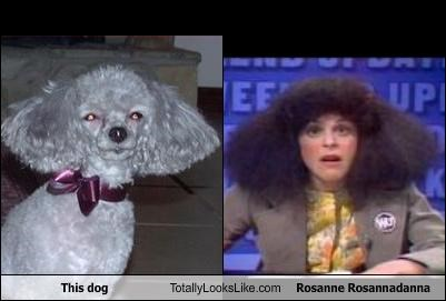 This dog Totally Looks Like Rosanne Rosannadanna