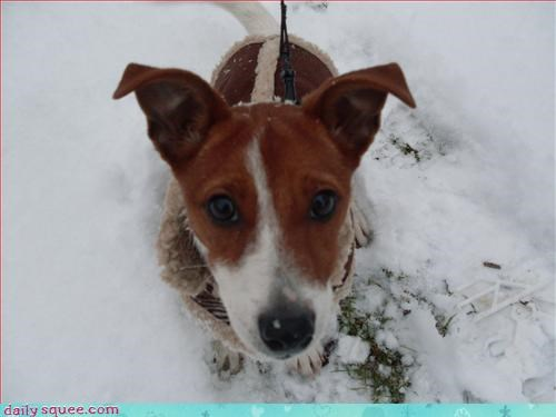 cute dogs snow - 2971705088