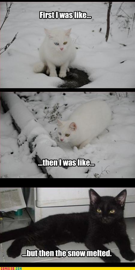 but then i,camo,kittehs,snow