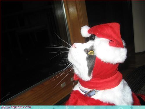 cat christmas santa - 2972172288