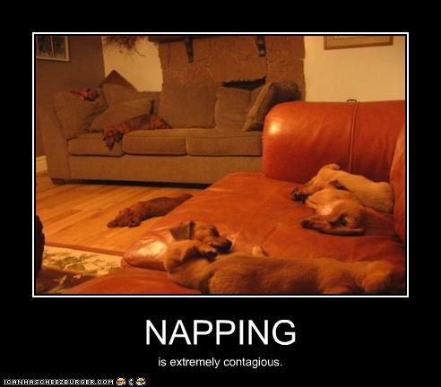 NAPPING is extremely contagious.