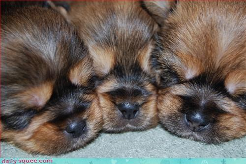 dogs puppy snore - 2972506368