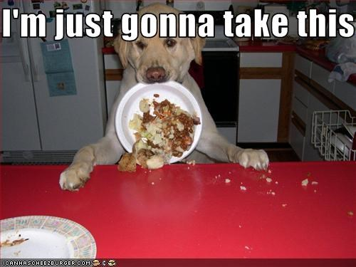 food,labrador,nom,plate,steal