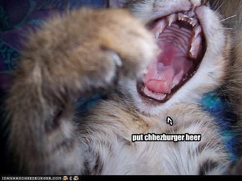 Cheezburger Image 2973015296