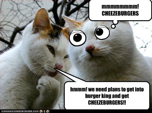 Cheezburger Image 2973036544