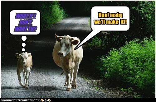 Cheezburger Image 2973045248