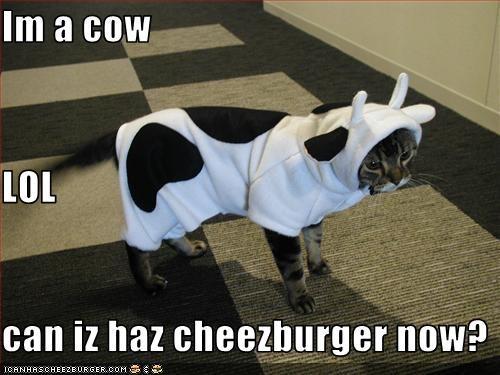 Cheezburger Image 2973307136
