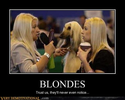 BLONDES Trust us, they'll never even notice...