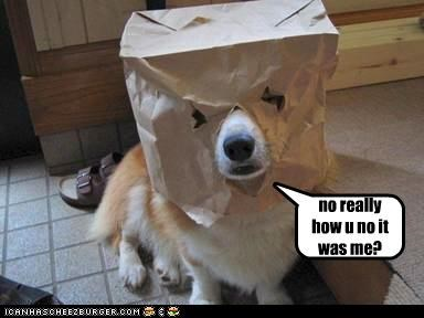 bag,corgi,disguise,FAIL