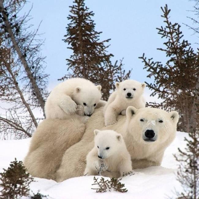 40 cute animal family photos