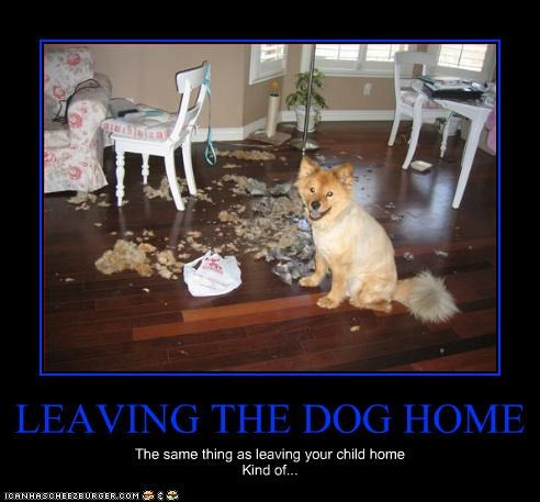 LEAVING THE DOG HOME The same thing as leaving your child home Kind of...