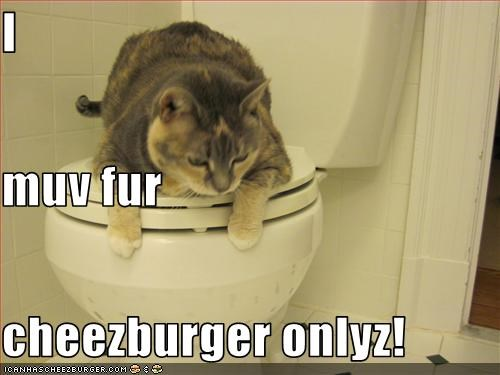 Cheezburger Image 2977539840