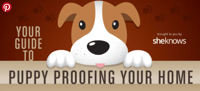 INFOGRAPHIC GUIDE TO PUPPY PROOF HOME