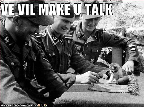 kitten,nazis,wtf