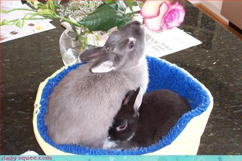 bunny love romance - 2979497472