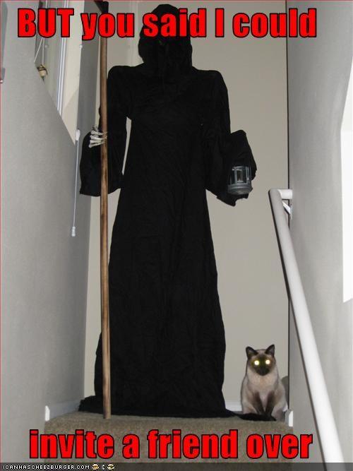 basement cat evil friend - 2979623936