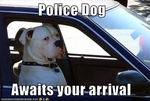 Police Dog Awaits your arrival - Cheezburger - Funny Memes