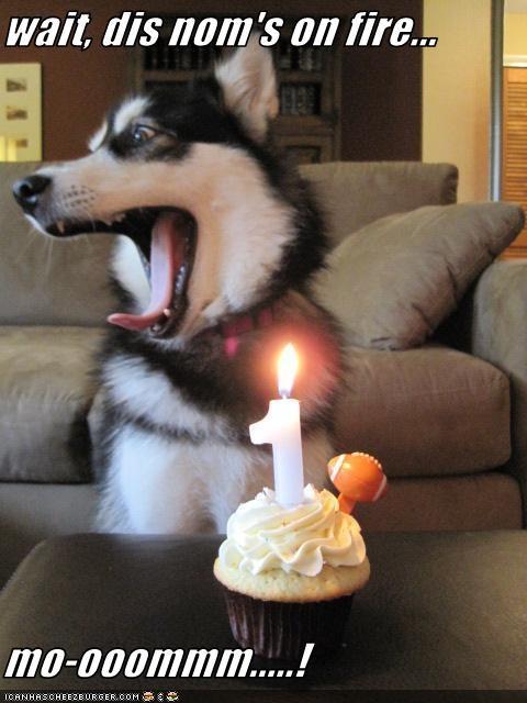 cupcake,fire,mom,nom,siberian husky