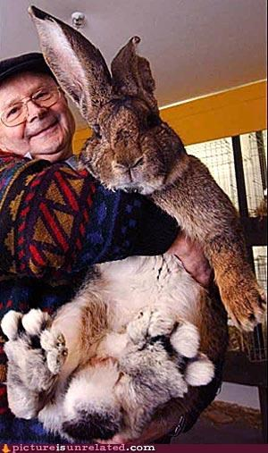 Easter Bunny giant rabbit wtf - 2982470656