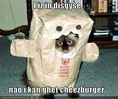 Cheezburger Image 2982476032