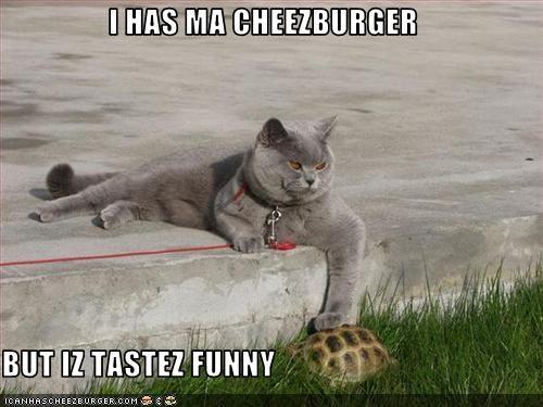 Cheezburger Image 2983249920