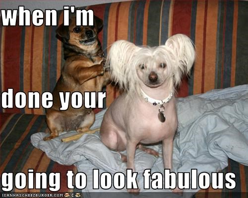chinese crested,hair,haircut,pugdachshund-mix,style