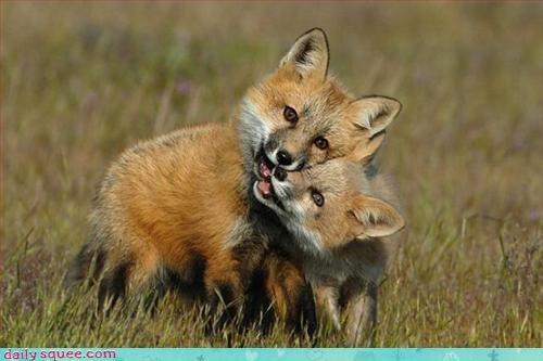 fox invisible noms - 2983792640