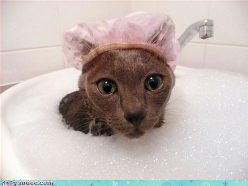 bath cat thinks hes people - 2983818240