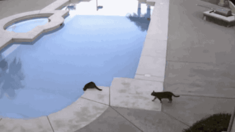 a funny gif of a dog jumping ontop of his owner in the pool - cover for a list of funny gifs that prove animals are just really jerks to other animals or humans