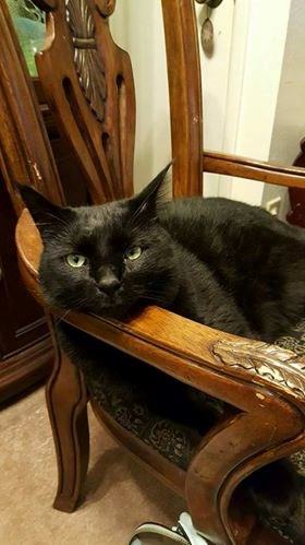 a pretty black cat sitting in a chair - cover for a story of a cat coming home