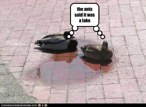 the ants said it was a lake! the ants said it was a lake
