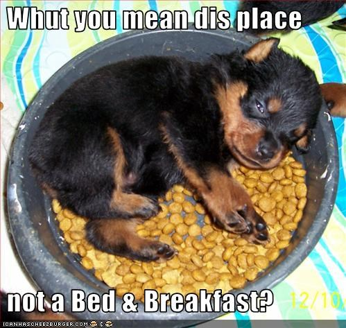 bed bowl breakfast dishes food puppy rottweiler sleep - 2985635584