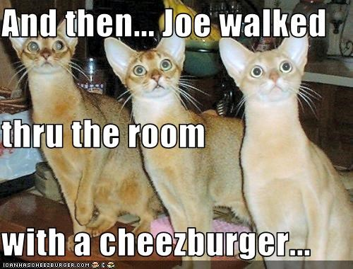 Cheezburger Image 2985686784