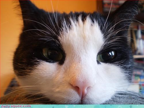 cat cute nom - 2986266880