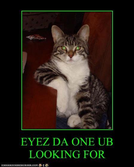 Cheezburger Image 2986308864