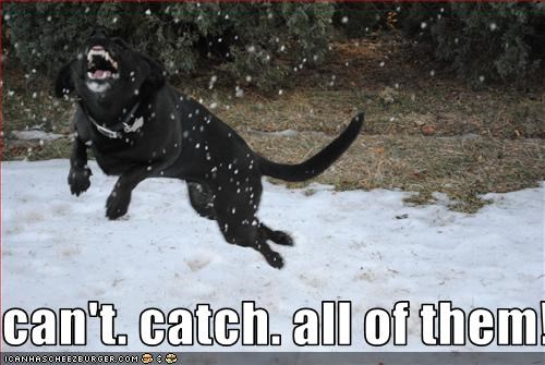 catch,labrador,snow,snowflake