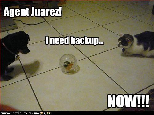 Agent Juarez! I need backup... NOW!!!